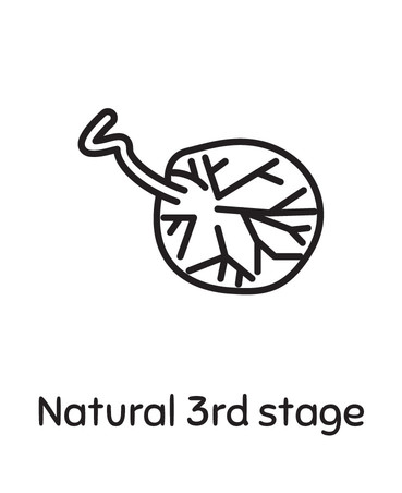 Natural 3rd Stage